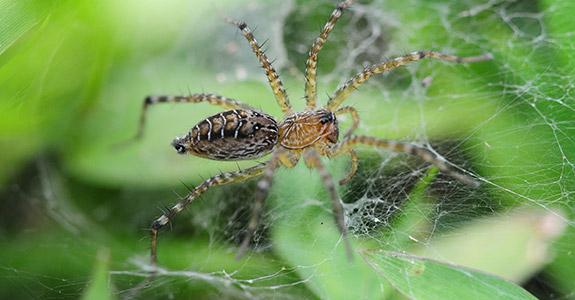 Spider Control Treatment