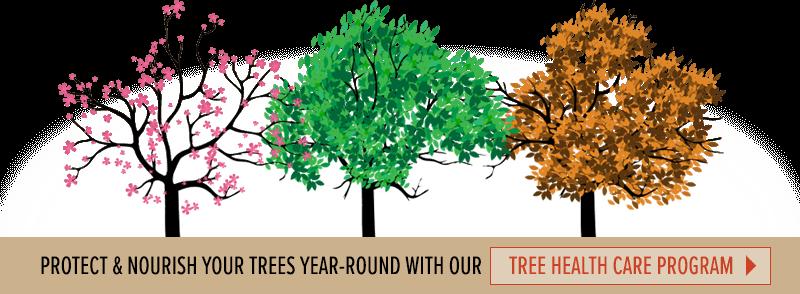tree care program