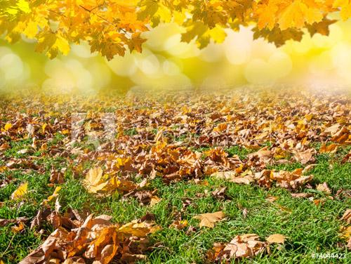 Fall Tree Care