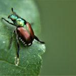 bugs-that-kill-trees